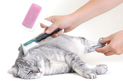 Cat Grooming Rules - Live.Love.Pet! Cat Grooming in Kaimuki, Honolulu