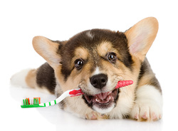 Teeth Health Question - Live.Love.Pet! Pet Grooming in Hawaii